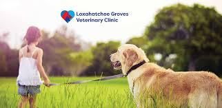 Loxahatchee Groves Veterinary Clinic